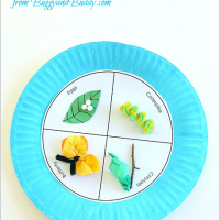 Butterfly Life Cycle - Paper Plate Craft