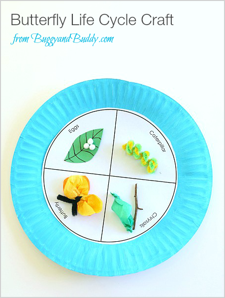 Craft Ideas For Life Cycle Of A Butterfly