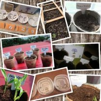 7 Easy Tree Raising Kits You Can Grow at Home